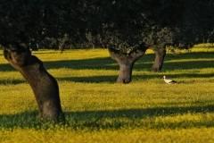 Cigüeña y pradera