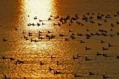 Aves en el Pantano del Rosarito I