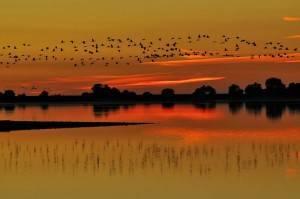Aves en el Pantano del Rosarito III